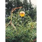 Bird Scare Baloon | BIRD,FLIES & VERMIN CONTROLS