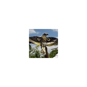 Hawk Bird Scarer   BIRD,FLIES & VERMIN CONTROLS